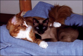 Multi-Cat- Household