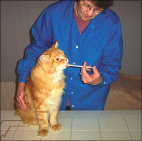 Is Your Cat In Pain