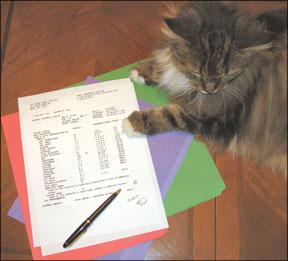 Feline Pancreatitis