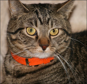 Feline Cancer Research