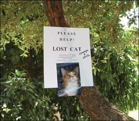 Post Signs For a Lost Cat