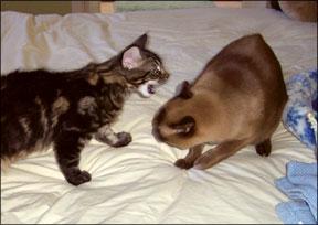 Aggresive Kitten