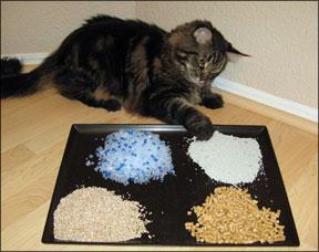 Alternative Kitty Litters