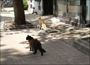 Outdoor Cats