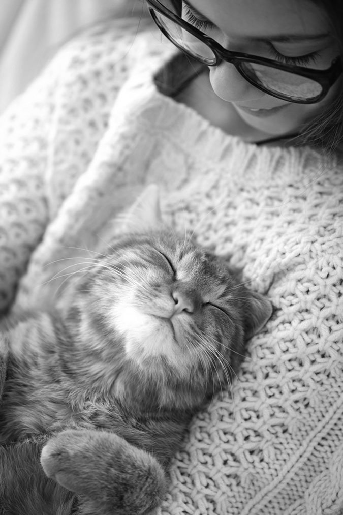 cute cat sleeping on chest
