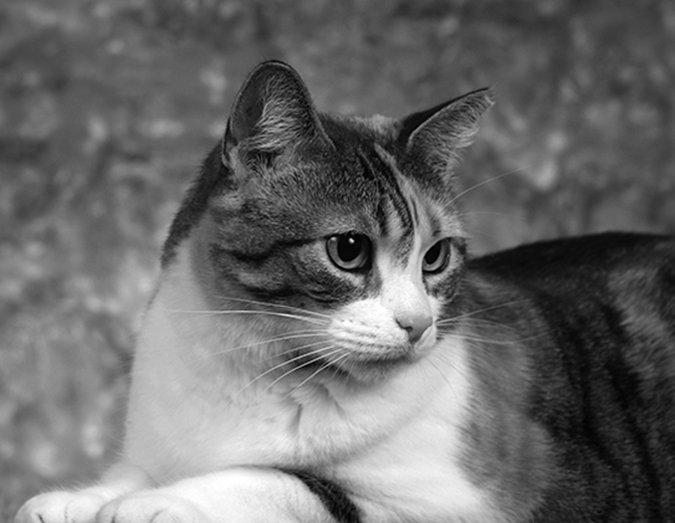 Elizabeth the cat