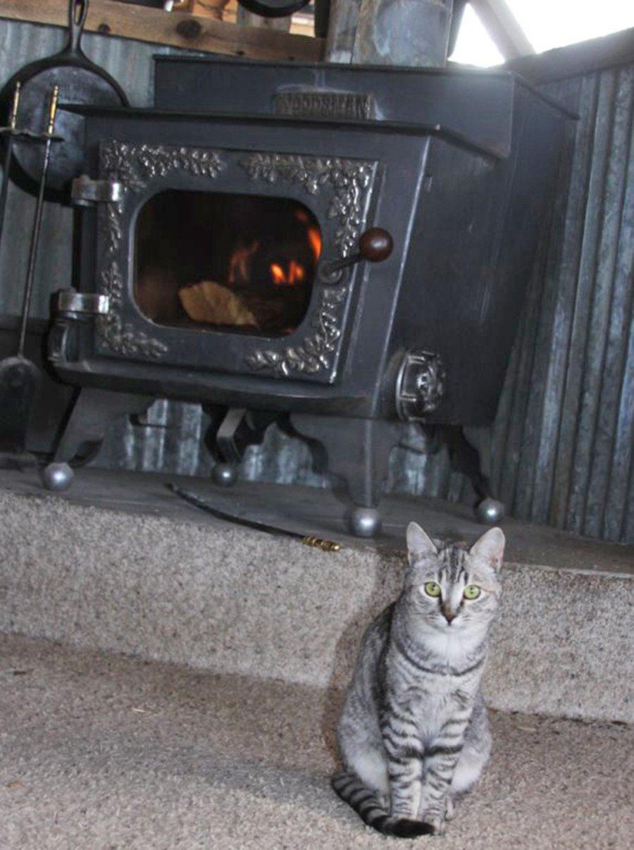 hearthside cat