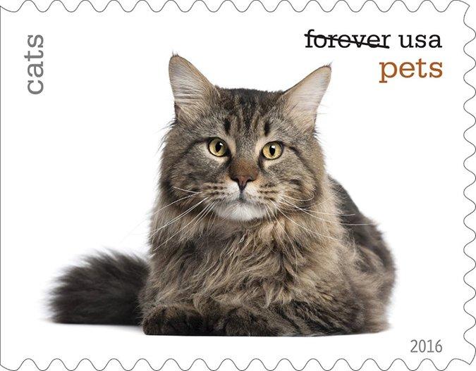 cat postal stamps