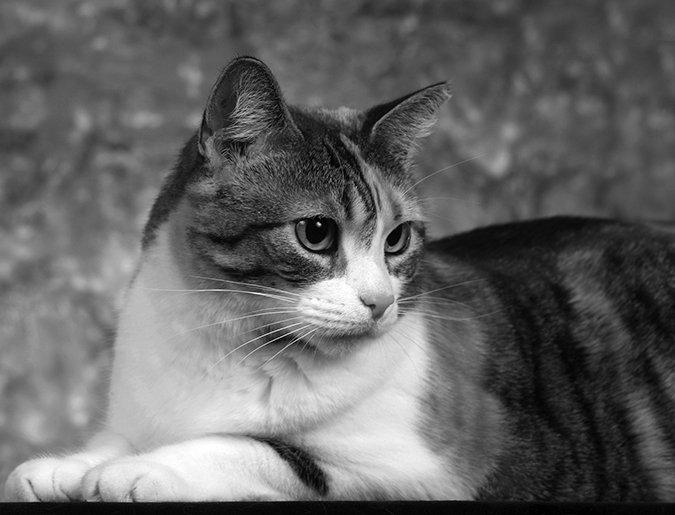 CatWatch Newsletter