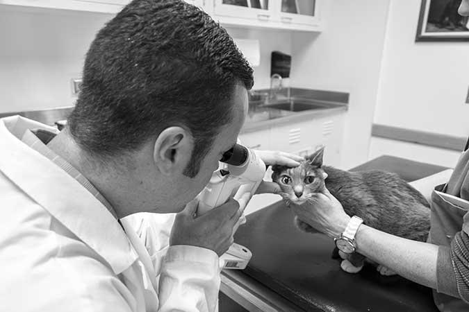 feline ophthalmologist Eric C. Ledbetter