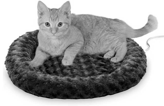 cat laying on cat bed