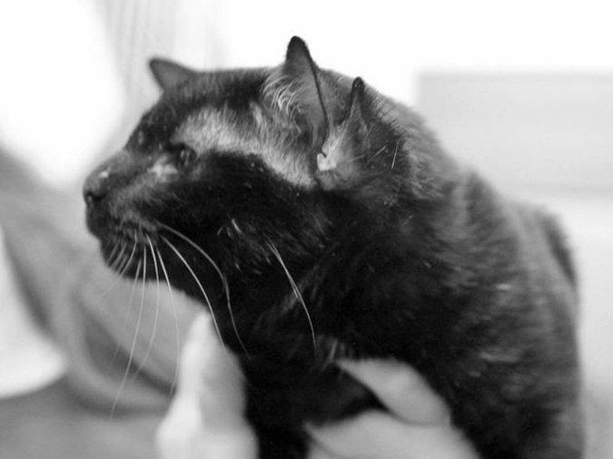 Batman the 4-eared cat