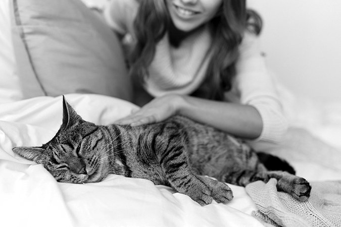 resting cat