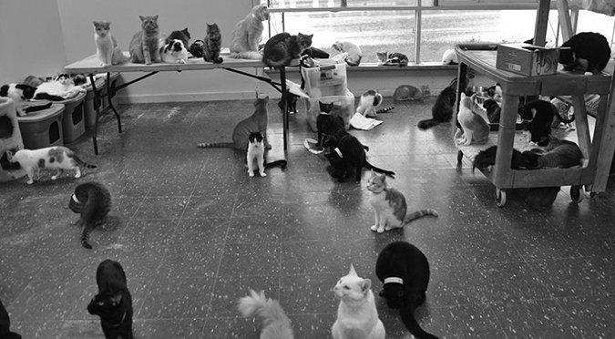 ASPCA cat sanctuary