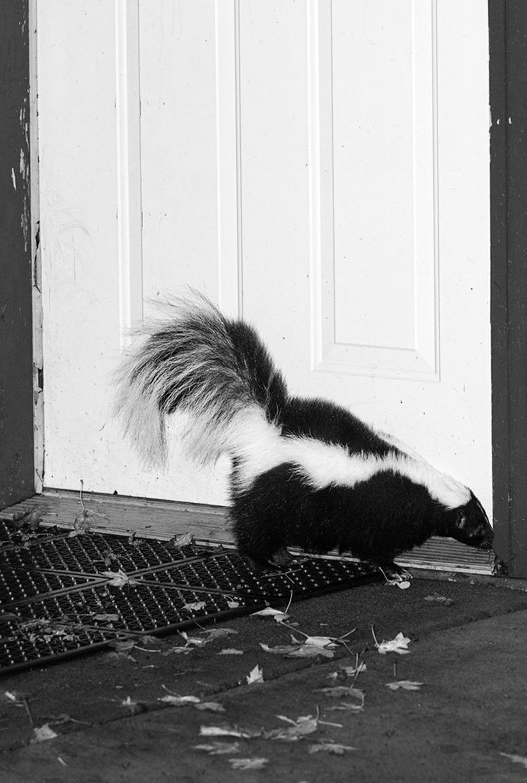 Remove Skunk Odor