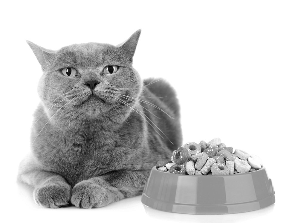 Dry Food and Diabetes