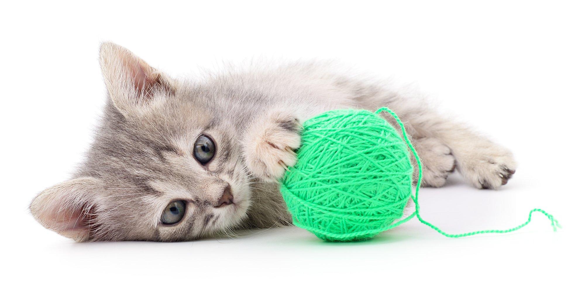 yarn and kitten