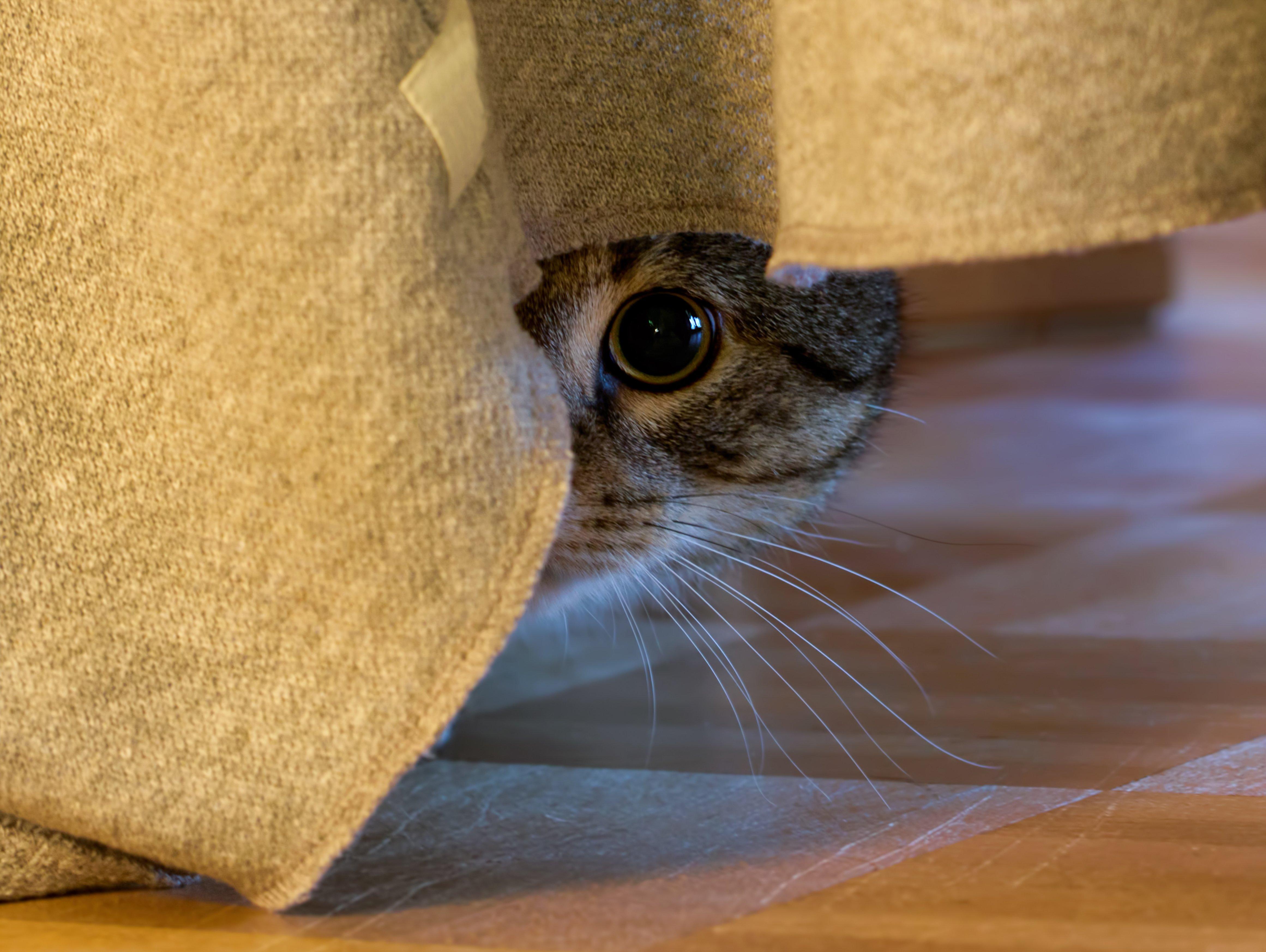cat bladder infection