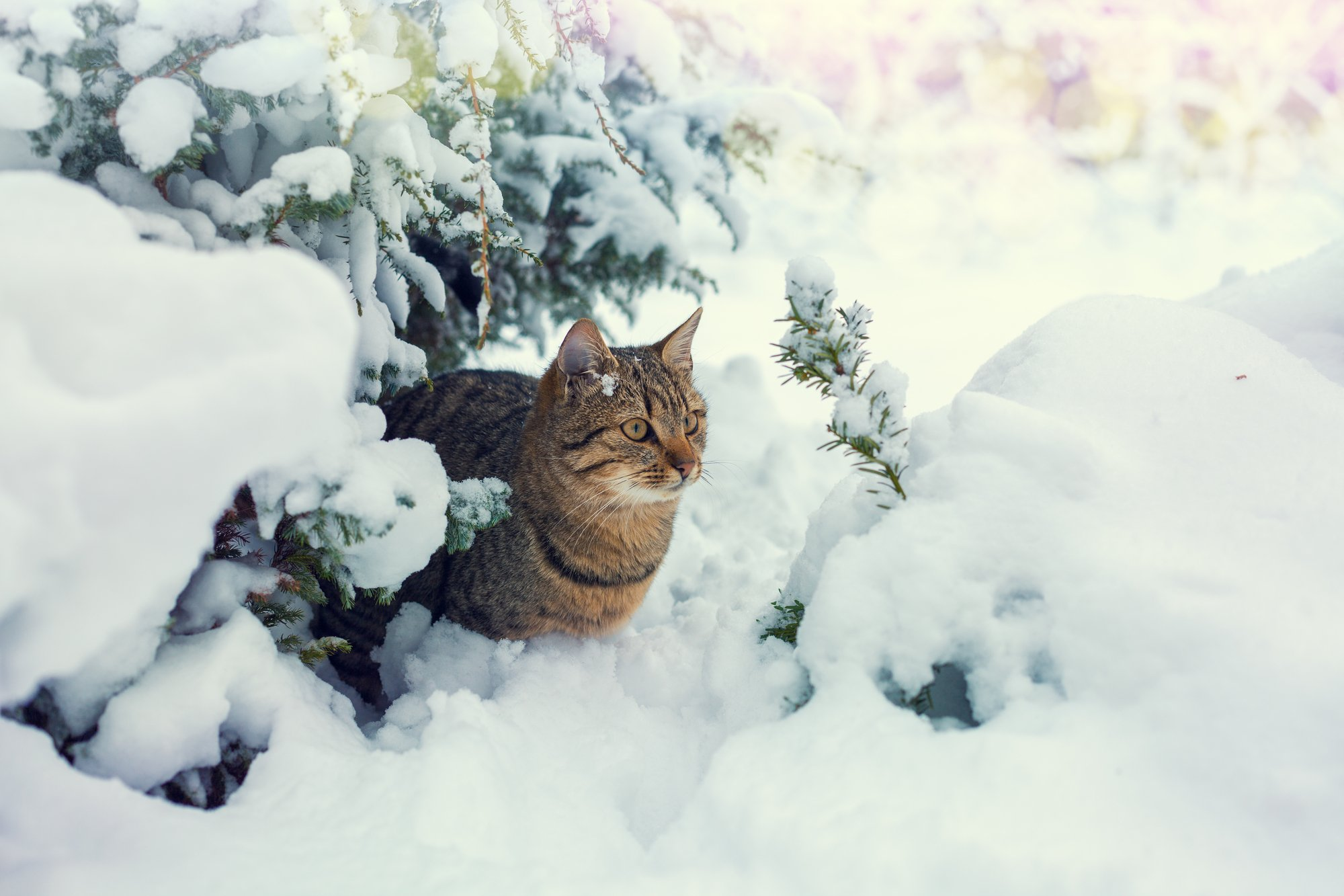 Shivering Cats Catwatch Newsletter