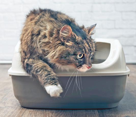 endoscopy on cats
