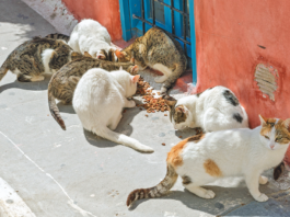stray/feral cats