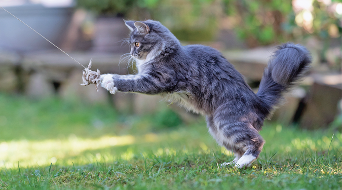 So Your Cat Thinks He's a Tiger - Catwatch Newsletter