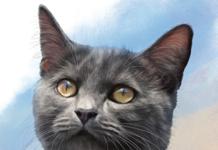 Gallstones in Cats