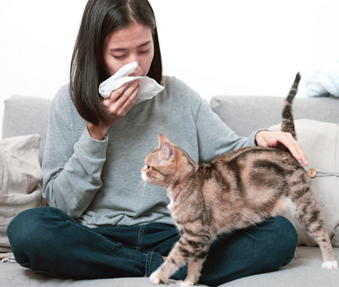Allergy Control for Cat Owners - Catwatch Newsletter