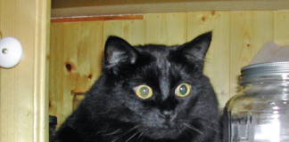 Dr. Perry's cat , Pippe
