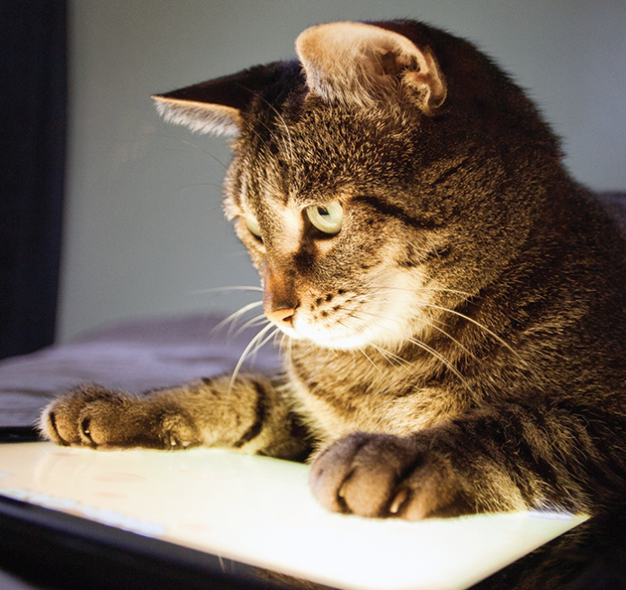 Using a tablet or smartphone is pretty commonplace. It shouldn't surprise anyone that veterinary medicine is embracing it.