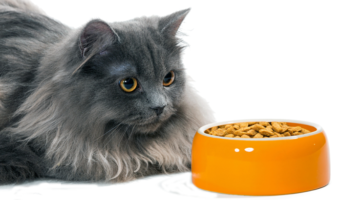 Cat food ingredients are screened for aflatoxins and other contaminants, but aflatoxin can be difficult to detect at its initial stages and may therefore slip into a batch of food, undetected.