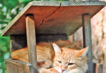We're not so sure this cat's perch inside a birdfeeder is going to pay off, but you have to admire his moxy.