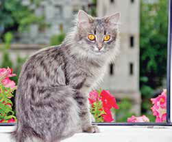 Even indoor cats can be affected by outdoor allergens that blow in through open windows.