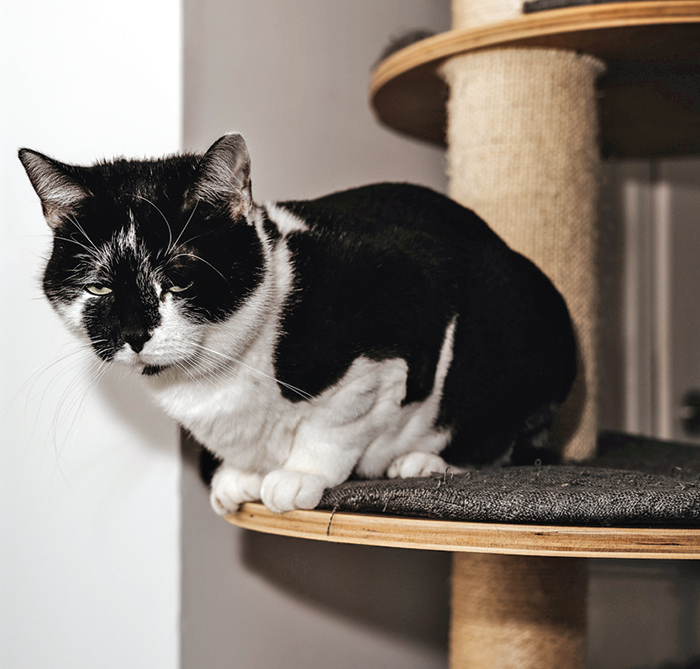 """You may notice your arthritic cat be a little more """"careful"""" about things, like slowing down, not climbing to the very top."""