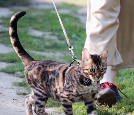 You cat will enjoy a daily walk to change his environment, breathe fresh air, and check out what's happening.
