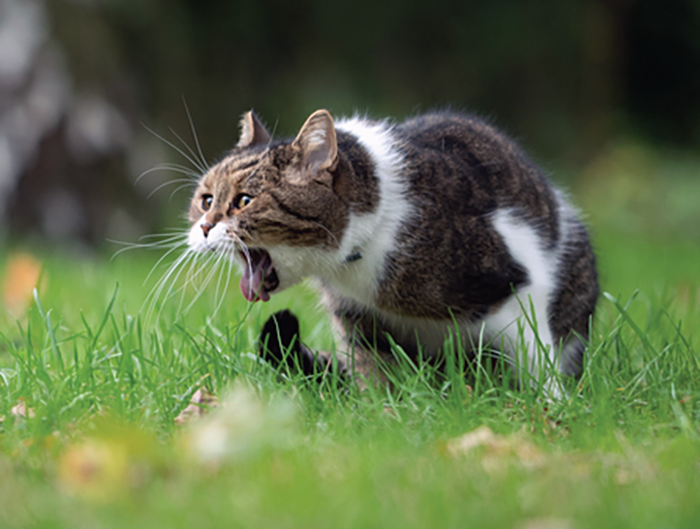 Your cat finds vomiting no more pleasant than you do.