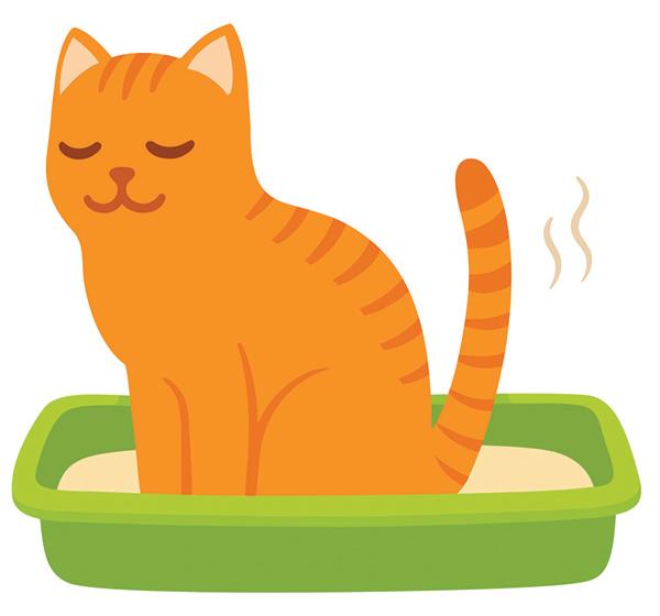 Coronavirus Cat Litter