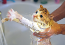 If this picture looks familiar, you're far from alone. Cats tend not to be big fans of baths in general, especially with lots of lather.
