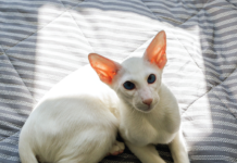 Sunlight, even through a window, can be a problem for some cats, especially white cats.
