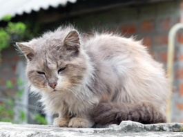 Well, of course you want to help this pretty, sad stray cat. But start with a trip to the veterinarian for FIV testing and checking for a microchip in case he has caring owners who want him back.